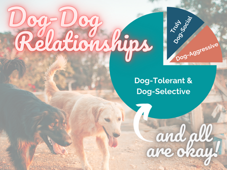 Dog-Dog Relationships
