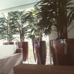 Vasos Vietnamitas e Palmeira Rafis