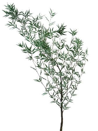 Árvore mossô