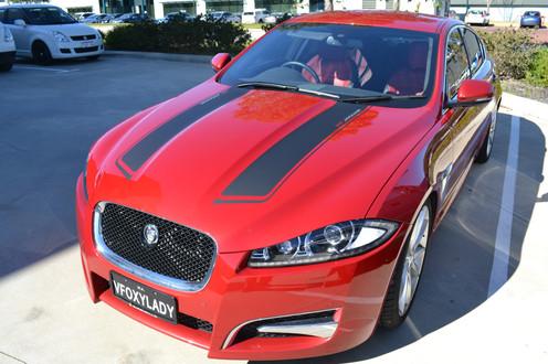 Jaguar Striping.jpg