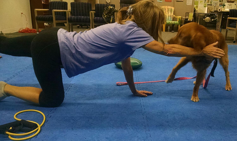 Dog/human fitness, Agility handlers