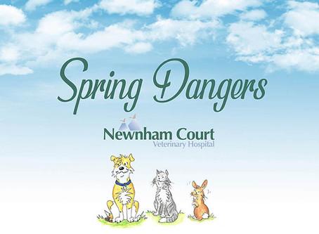 Spring Dangers - 2019