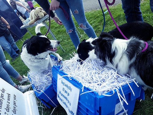 Paws in the Park 2018 image 6.jpg