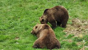 Aran Park : à la découverte des animaux sauvages des Pyrénées