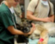 veterinary-85925_1280.jpg