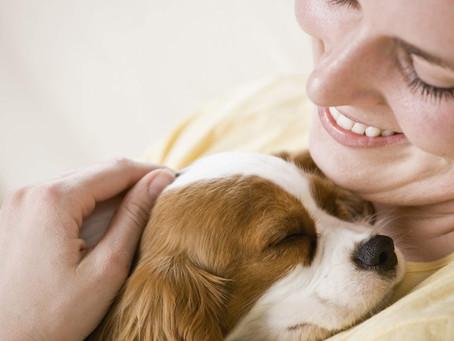 New Dog Vaccine