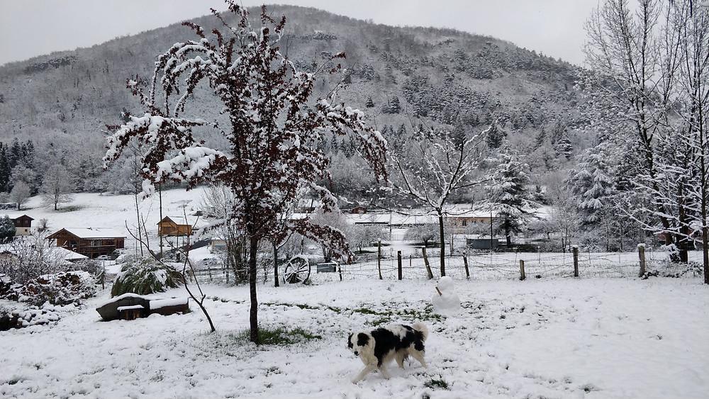 Jardin du gîte Aquacagire sous la neige à Juzet d'Izaut, Haute-Garonne.