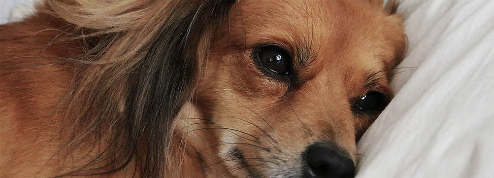 Sad  Dog.jpg