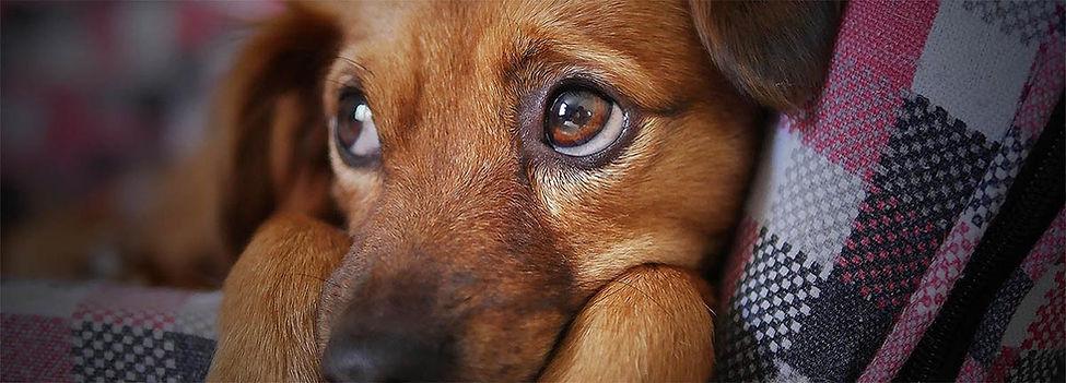 Dog on blanket.jpg