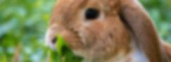 Rabbit eating.jpg