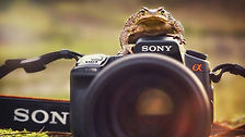 animals_with_cameras_02-800x450.jpg