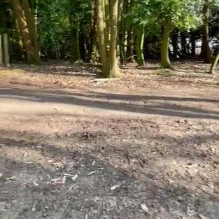 a track into some of the woods