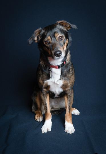 Verina-Litster-Pet-Portraits-26.jpg