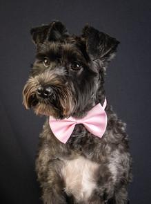 Verina-Litster-Pet-Portraits-18.jpg