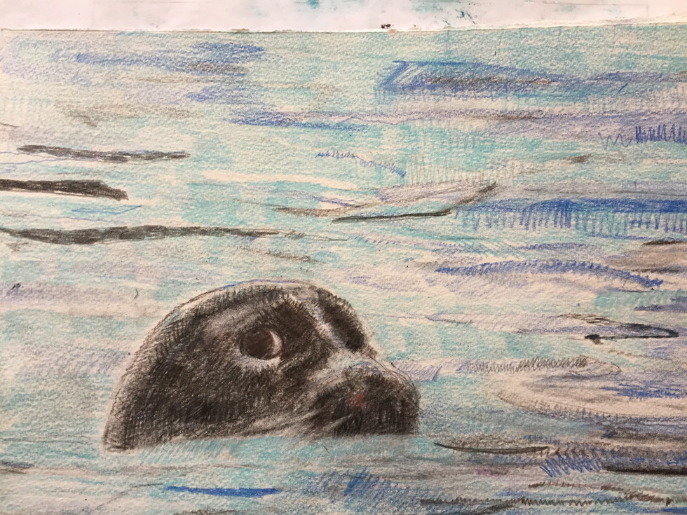 Watchful Ringed Seal