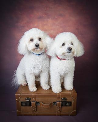 Verina-Litster-Pet-Portraits-12.jpg