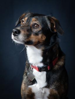 Verina-Litster-Pet-Portraits-24.jpg
