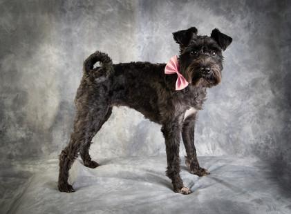 Verina-Litster-Pet-Portraits-21.jpg
