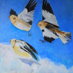 Flight of Snow Buntings, Oil, 91cmx91cm,