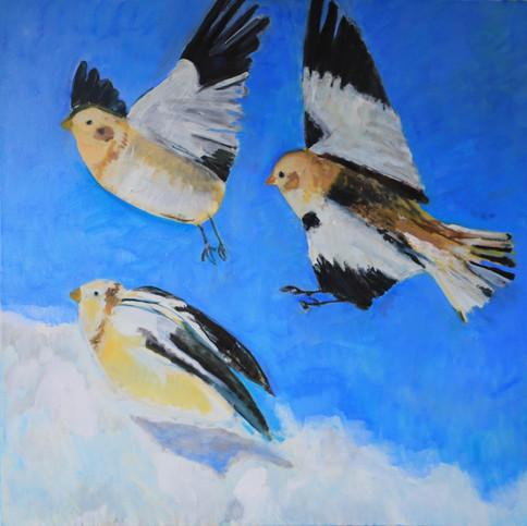 Flight of Snow Buntings