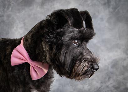 Verina-Litster-Pet-Portraits-20.jpg