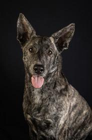 Verina-Litster-Pet-Portraits-14.jpg