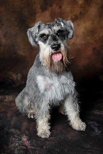 Verina-Litster-Pet-Portraits-23.jpg