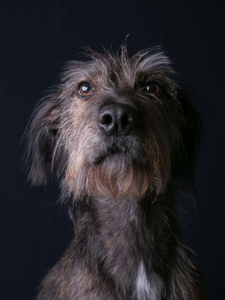 Verina-Litster-Pet-Portraits-37.jpg