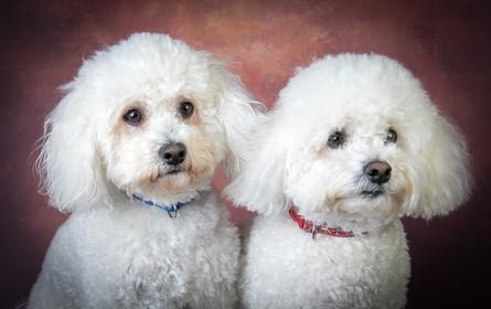 Verina-Litster-Pet-Portraits-13.jpg