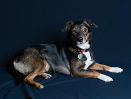 Verina-Litster-Pet-Portraits-25.jpg