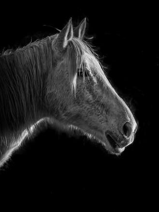 Verina-Litster-Pet-Portraits-9.jpg