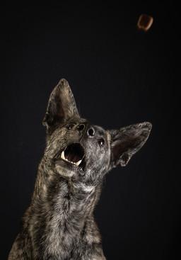 Verina-Litster-Pet-Portraits-15.jpg