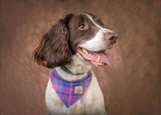 Verina-Litster-Pet-Portraits-27.jpg