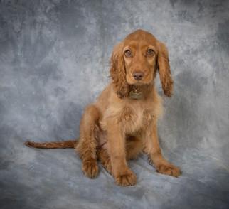 Verina-Litster-Pet-Portraits-29a.jpg