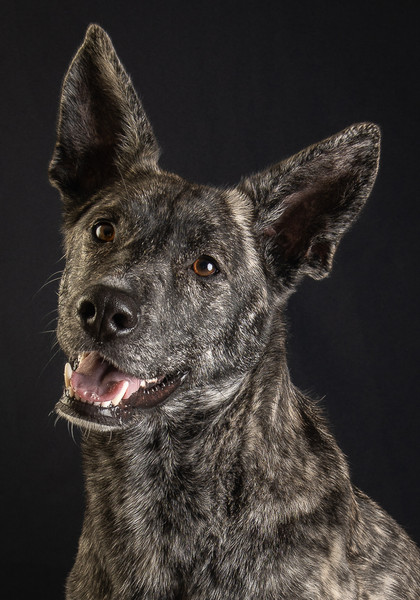 Verina-Litster-Pet-Portraits-16.jpg