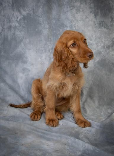 Verina-Litster-Pet-Portraits-29.jpg