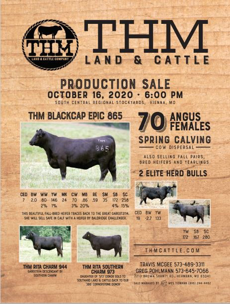 thm cattle female sale.JPG
