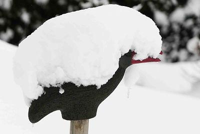 Rabe Winter-9.jpg