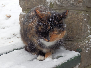 Where Did All the Homeless Cats Come From?