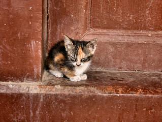 Six Ways to Live Harmoniously with Community Cats