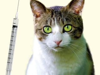 Do Feral Cats Transmit Disease?