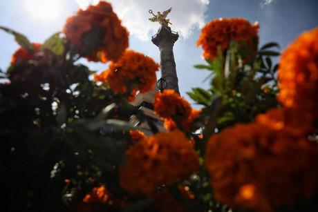Miles de flores de Cempasúchil en avenidas capitalinas