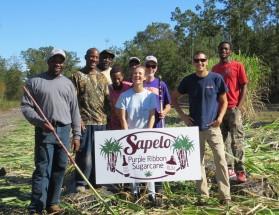 """Clemson helps reintroduce Purple Ribbon sugarcane to Sapelo Island"""