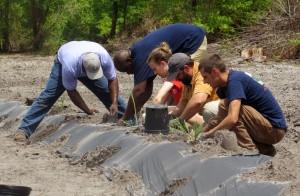 """Clemson joins effort to reintroduce sugarcane to Sapelo Island"""
