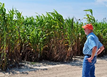 """Clemson's Advanced Plant Technology Program extending its roots in S.C."""