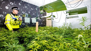 The Future of Cannabis in the UK