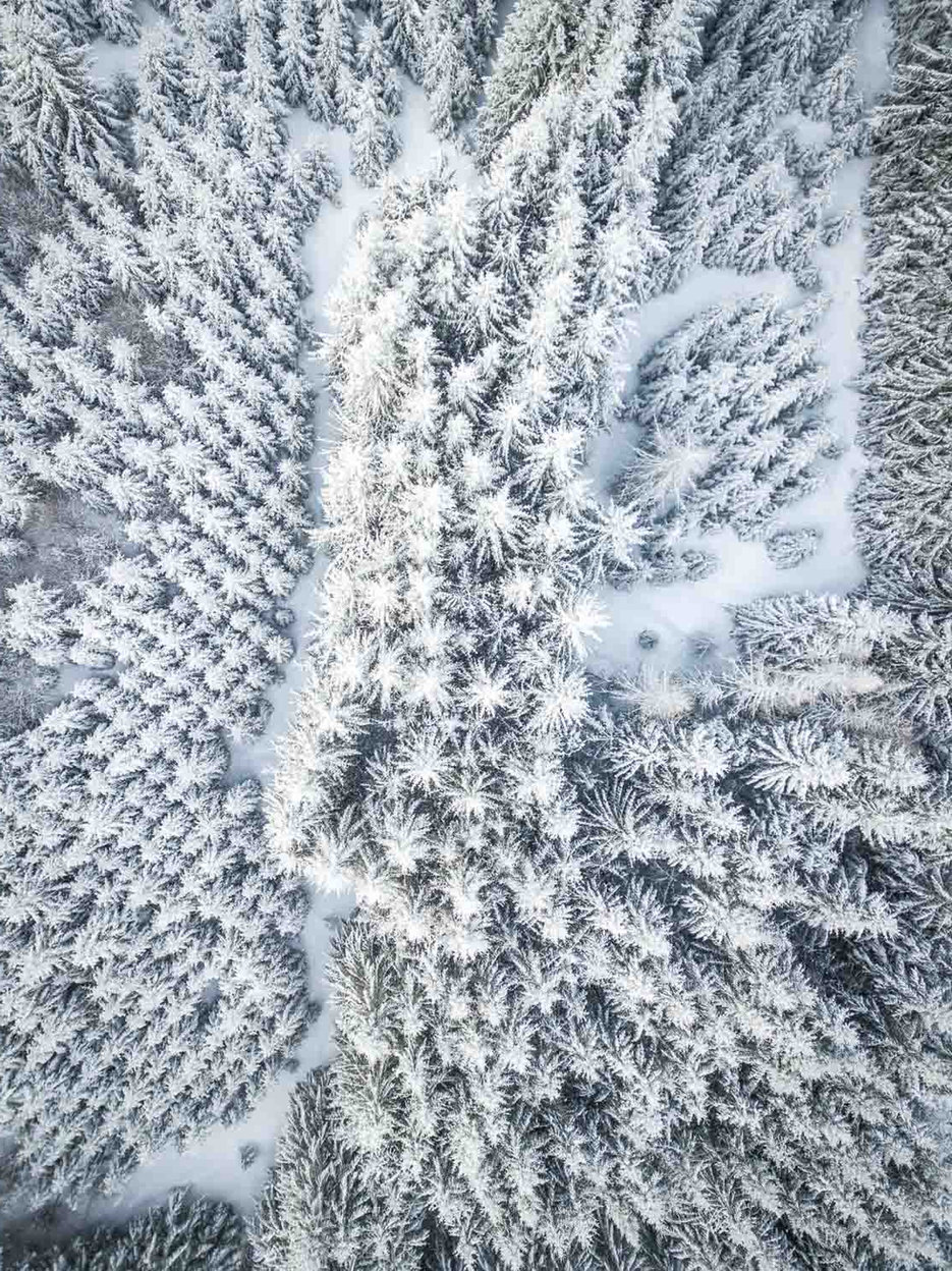 28.12.photo-drone-les-sapins-en-hiver-re