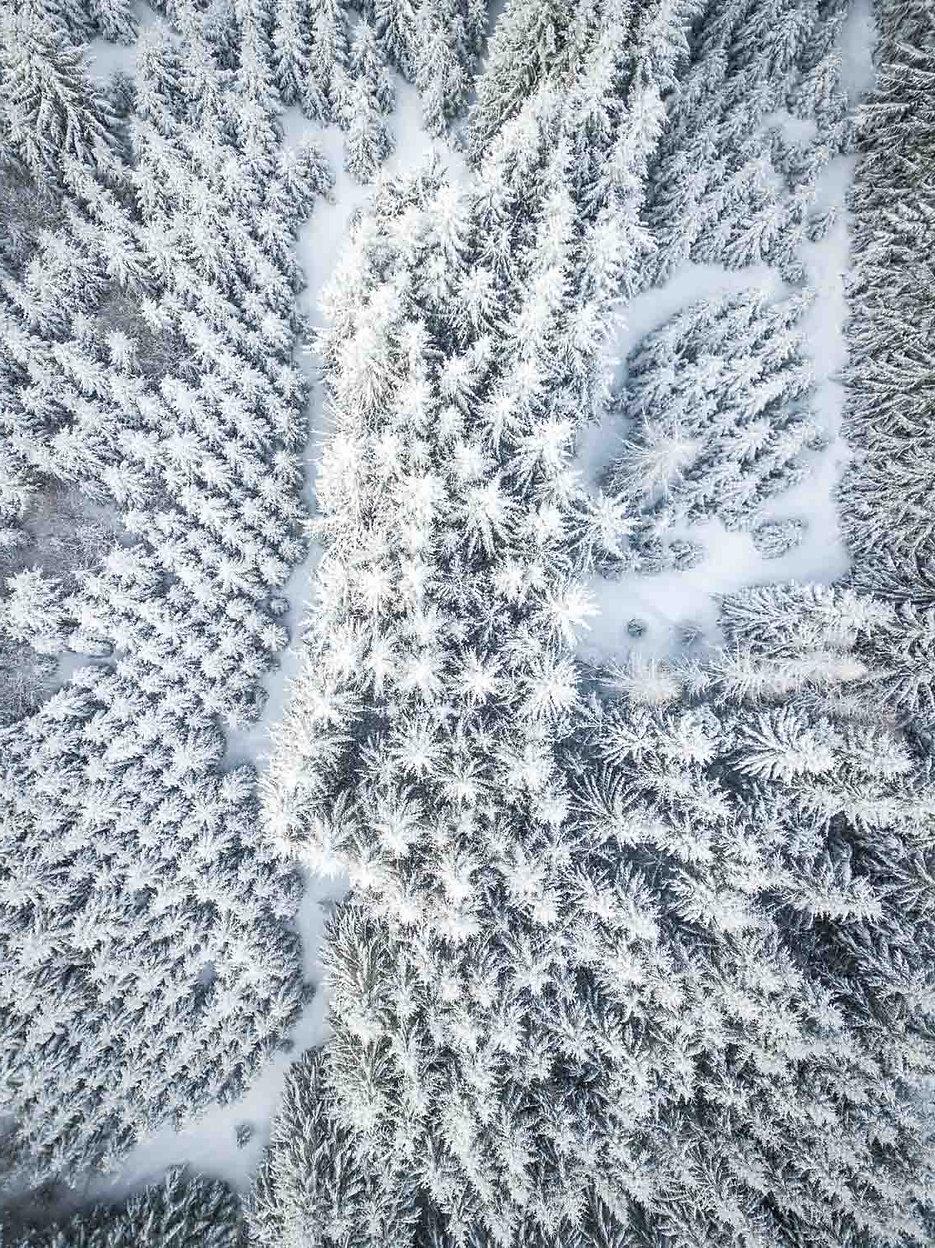 28.12.photo-drone-les-sapins-en-hiver-re