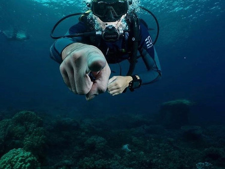 Learn to take a dive with Big Ocean Dive