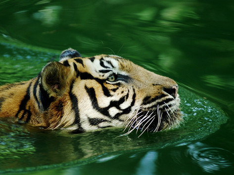 10 endangered species that require your attention